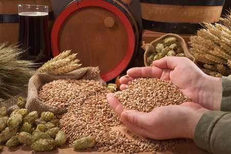 beer and beer barrel, hops, wheat, grain, barley and malt isolated on black