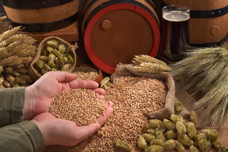 beer and beer barrel, hops, wheat, grain, barley and malt Stock Photo