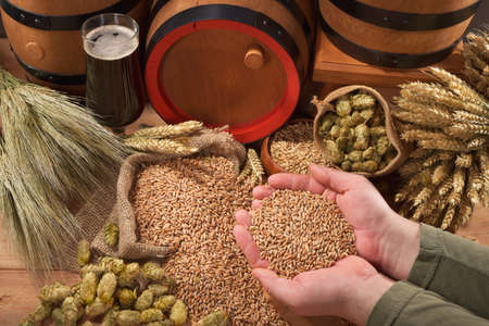 beer and beer barrel, hops, wheat, grain, barley and malt Stok Fotoğraf