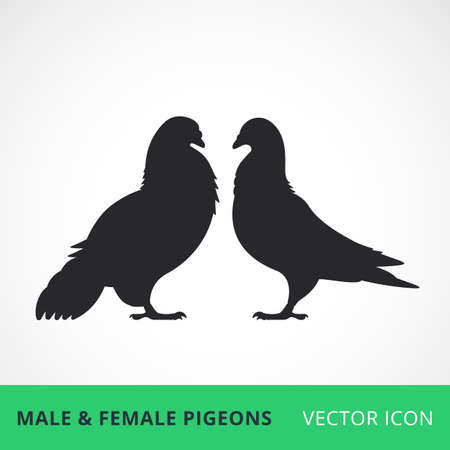 love image: Two pigeons love vector one color silhouettes male and female pigeons vector icons , simple pigeons family image Illustration