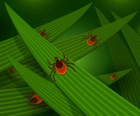 tall grass: Mites in the tall green grass flat illustration, mites hiding in the grass, tick-borne mites color icons, danger ticks bugs in nature grass