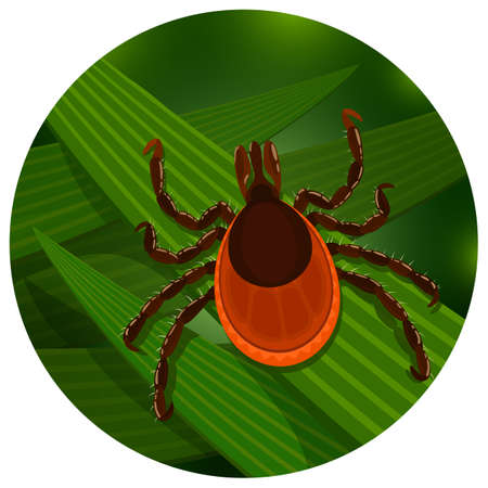 tall grass: Mite in the tall green grass flat vector illustration, mite hiding in the grass, tick-borne mite color icon, danger tick bug in nature grass, color illustration in circle