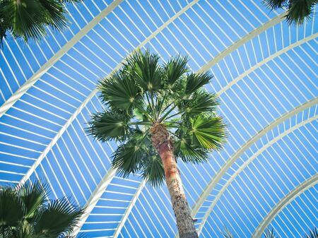 botanic: Palm Tree in Botanic Garden