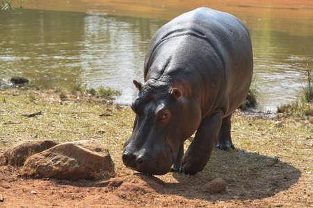 Mlilwane Wildlife Sanctuary is Swaziland