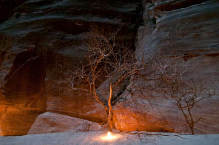 Tree illuminated by candle along the trail in Petra, Jordan at night - one of most beautiful sites in middle east photo