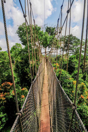 elevated walkway: Canopy Walkway in Kakum National Park  A 375 square km national park located in the Central Region of Ghana  Kakum National Park has a long series of hanging bridges at the forest canopy level