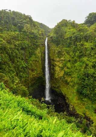 Akaka falls Hawaii, Big Island  Famous Hawaiian waterfall  photo
