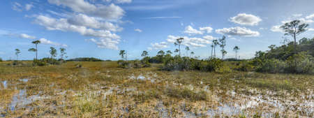 Scenic landscape in the Florida Everglades National Park during the winter