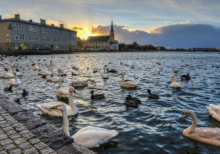 The Reykjavik Free Church is a church in the Free Lutheran congregation of Iceland  In the background of ducks and geese in the city center