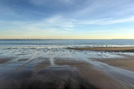 ブライトン ビーチとコニー ・ アイランド、ニューヨーク、冬季のリトル オデッサとして知られているカモメ。