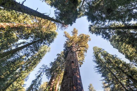 General Sherman - the largest tree on Earth, Sequoia National Park, California.