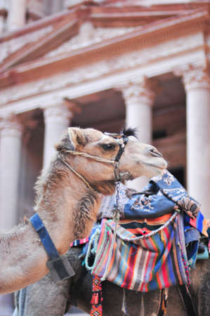 khazneh: Camel beside Al Khazneh in Petra, Jordan. Al Khazneh was carved out of a sandstone rock face. It has classical Greek-influenced architecture. It is known as the Treasury. Stock Photo