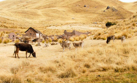 sacred valley of the incas: Farm along the Cusco-Puno Road in Peru, South America following the Sacred Valley of the Incas.