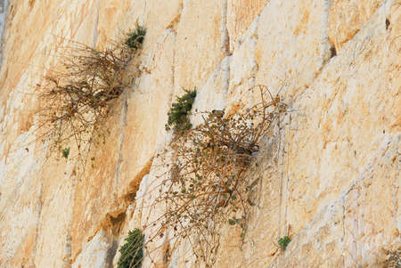 crevice: Close up of the Western Wall in Jerusalem.