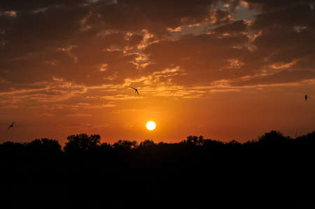 dramatic sunrise: Dramatic sunrise at Kruger National Park, South Africa.