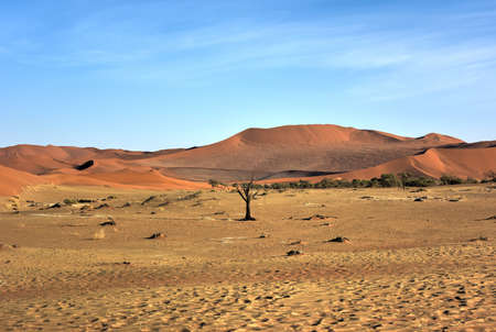vlei: Hidden Vlei in the southern part of the Namib Desert, in the Namib-Naukluft National Park of Namibia.