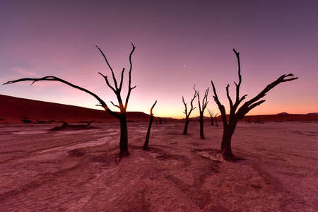 vlei: Dead Vlei at dusk in the southern part of the Namib Desert, in the Namib-Naukluft National Park of Namibia. Stock Photo