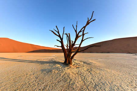 vlei: Dead Vlei in the southern part of the Namib Desert, in the Namib-Naukluft National Park of Namibia. Stock Photo