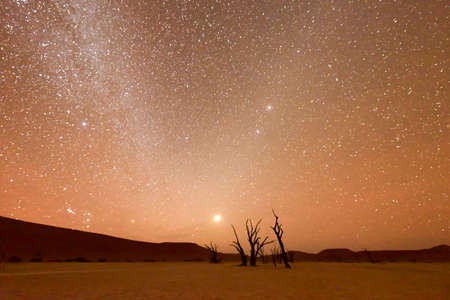 high desert: Dead Vlei at dusk in the southern part of the Namib Desert, in the Namib-Naukluft National Park of Namibia. Stock Photo