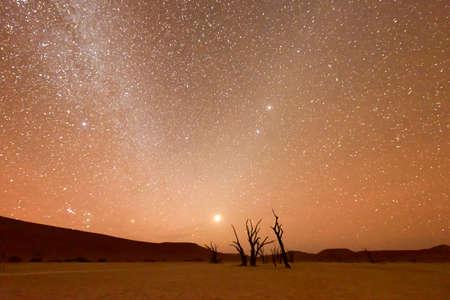 desierto: Vlei muerto en la oscuridad en la parte sur del desierto de Namib, en el Parque Nacional Namib-Naukluft de Namibia. Foto de archivo