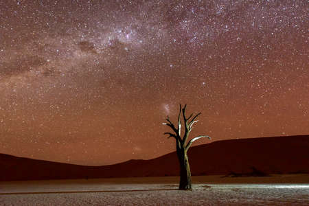 dead trees: Dead Vlei at dusk in the southern part of the Namib Desert, in the Namib-Naukluft National Park of Namibia. Stock Photo