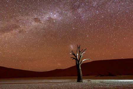 arboles secos: Vlei muerto en la oscuridad en la parte sur del desierto de Namib, en el Parque Nacional Namib-Naukluft de Namibia. Foto de archivo