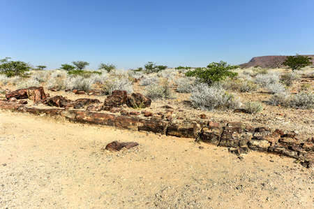 280 million years old Petrified forest, outside of Khorixas, Namibia. Stock Photo