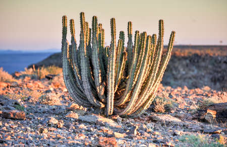 river: Cactus around the Fish River Canyon, Namibia. Stock Photo