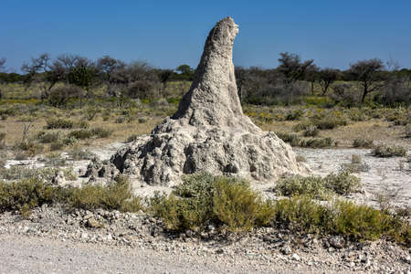 mound: Huge termite mound in Etosha National Park, Namibia, Africa.