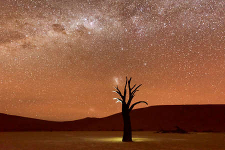 Dead Vlei at dusk in the southern part of the Namib Desert, in the Namib-Naukluft National Park of Namibia. Фото со стока