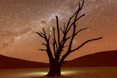 sossusvlei: Dead Vlei at dusk in the southern part of the Namib Desert, in the Namib-Naukluft National Park of Namibia. Stock Photo