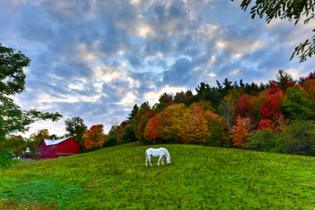 fall landscape: Horse grazing in an idyllic field in Vermont against autumn trees with peak foliage.