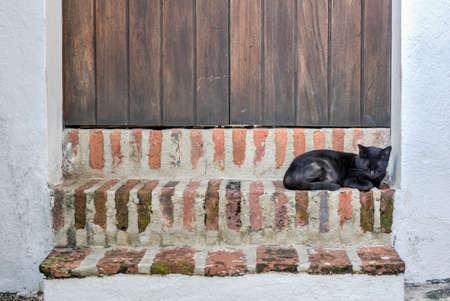 Cat on the streets of Old San Juan, Puerto Rico. 版權商用圖片