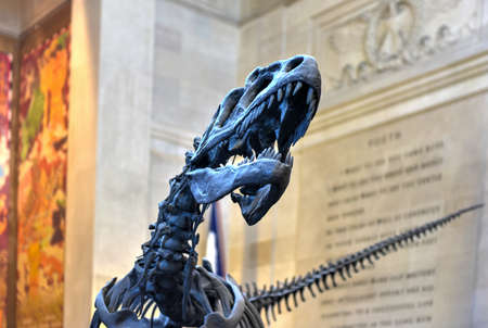 natural landmark: New York City - January 31, 2016: Allosaurus in the entrance hall of the American Museum of Natural History in Manhattan. Editorial
