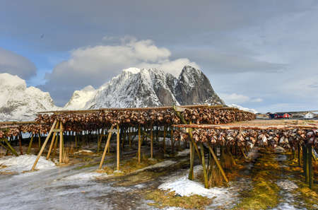 rorbuer: Stockfish (cod) in winter time in Reine, Lofoten Islands, Norway. Stock Photo