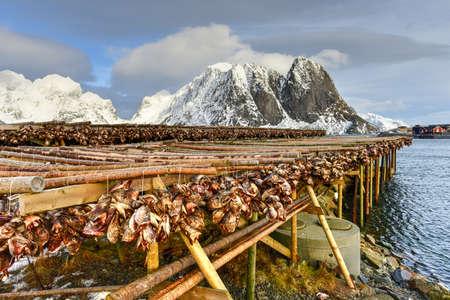 stockfish: Stockfish (cod) in winter time in Reine, Lofoten Islands, Norway. Stock Photo
