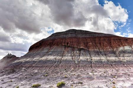 petrified: Petrified Forest National Park in Arizona, USA.