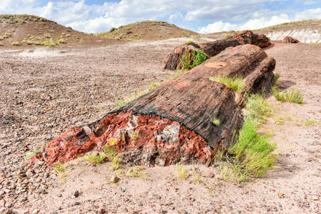 badland: The Jasper Forest in the Petrified Forest National Park in Arizona.