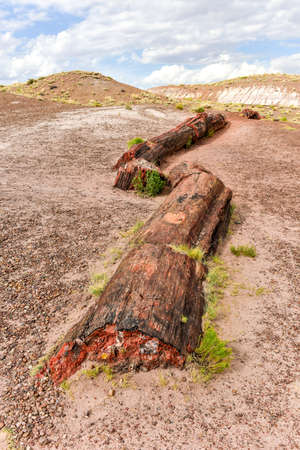 The Jasper Forest in the Petrified Forest National Park in Arizona.
