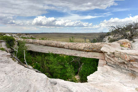 petrified: Agate Bridge in Petrified Forest National Park. It is a petrified log that spans a sandstone wash.