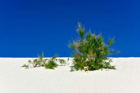 alamogordo: White Sands National Monument in New Mexico.