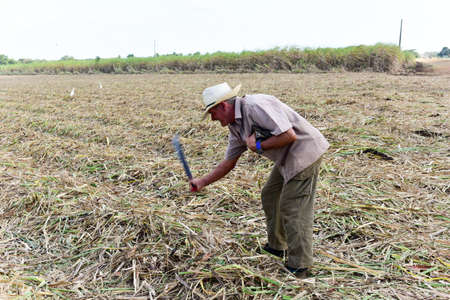 Guayabales, Cuba - Jan 13 2017: Cuban man with machete working sugar cane fields in Guayabales, Cuba. Editorial