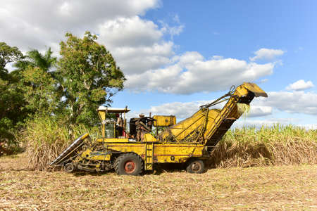 Sugar cane fields in the process of being harvested in Guayabales, Cuba.