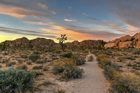 Beautiful landscape in Joshua Tree National Park in California.