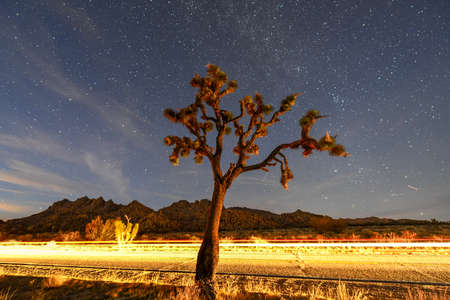 Beautiful landscape in Joshua Tree National Park in California at night.