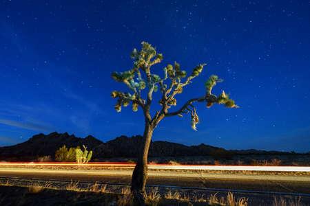 Beautiful landscape in Joshua Tree National Park in California at night.