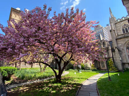New York City - Apr 19, 2020: Grace Church is a historic parish church in Manhattan, New York City which is part of the Episcopal Diocese of New York. Stock fotó