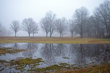 Barely visible through the fog are barren oak trees whose reflections are also visible in large puddles on the lawn at Cheesequake State Park in Matawan, New Jersey, USA.