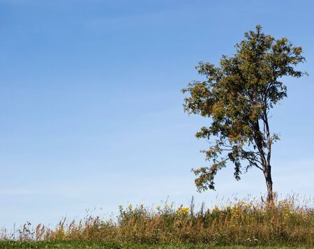 Summer landscape with a lone tree in a field Stock Photo - 7535357