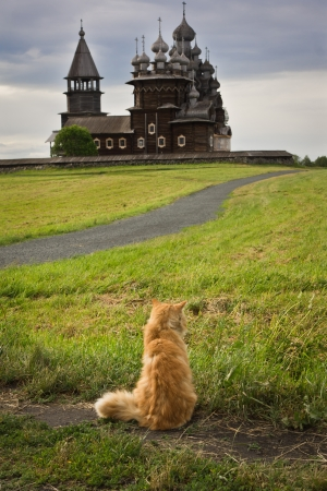 cat island: Cat on the background of the wooden churches Kizhi Island, Russia Stock Photo